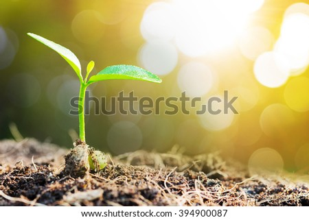 New life. Young sprout in springtime - stock photo