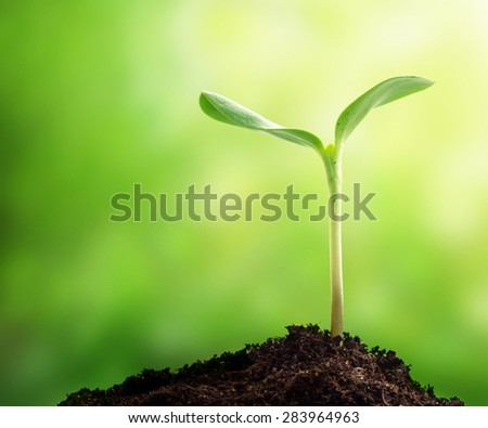 New life. Young sprout in springtime,Closeup. - stock photo