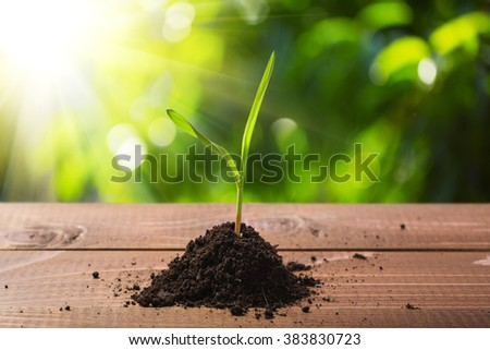 New life. Young sprout in springtime on the wooden table with sun beam - stock photo