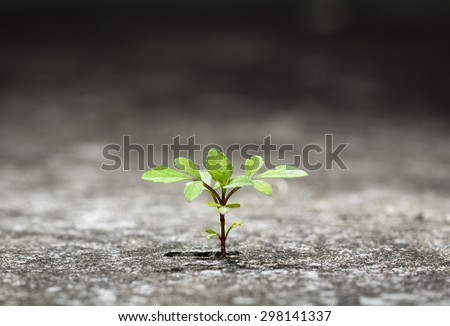 New plant germinate from the crack concrete of survival - stock photo