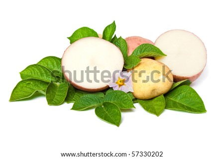 new potato with leaves and flowers - stock photo