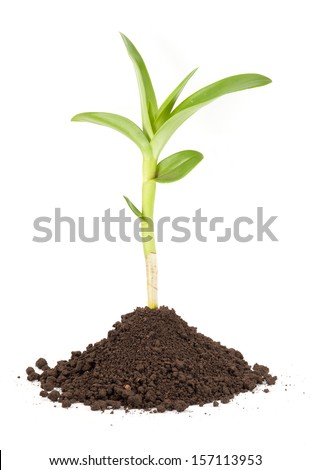 new sprout and dirt isolated on white - stock photo