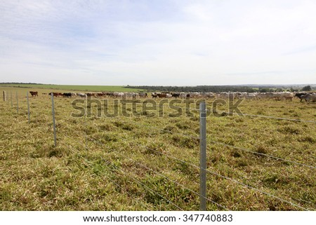 new steel fence in farm with cattle in background on countryside in brazil - stock photo