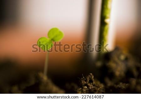 New tiny plant in the soil.Macro shot shallow dof. - stock photo
