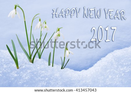 New Year 2017 greeting card, group of snowdrops Happy New Year text in English language, 2017 postcard - stock photo