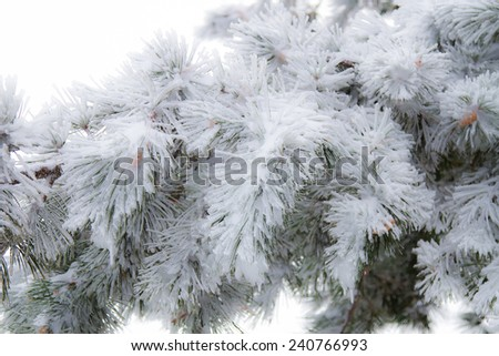 New Year to freezing in Sicily.  - stock photo