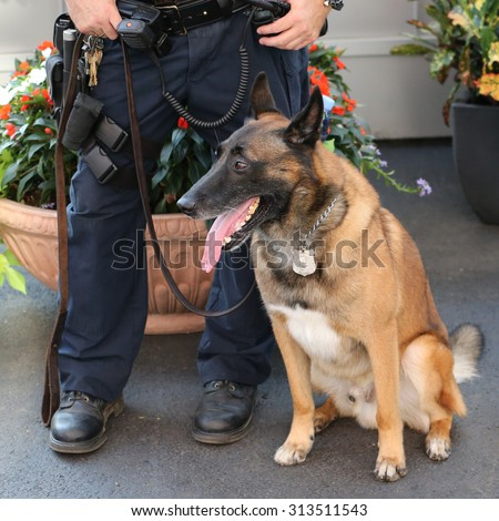 NEW YORK - AUGUST 29, 2015: NYPD transit bureau K-9 police officer and Belgian Shepherd K-9 Wyatt providing security at National Tennis Center during US Open 2015 in New York - stock photo