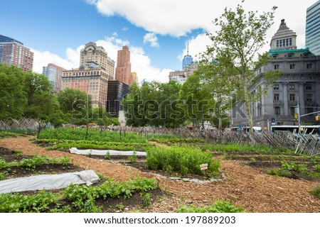 NEW YORK CITY - JUNE 6, 2014:  Battery Urban Farm gardening project in NYC. This one acre farm is the largest educational farm in Manhattan. - stock photo