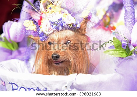 NEW YORK CITY - MARCH 27 2016; Easter Sunday was marked by the annual Bonnet Parade, filling 5th Avenue with hundreds of colorful hats & costumes. Little dog in hat rides in carriage - stock photo