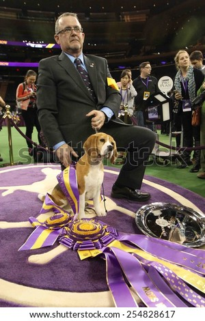 NEW YORK-FEB 17: Miss P, a 15-inch beagle with handler William Alexander after winning Best in Show award at the 139th Annual Westminster Kennel Club Dog Show on February 17, 2015 in New York City.  - stock photo
