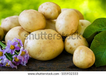 New, young potatoes, fresh and tasty. - stock photo