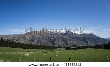 New Zealand sheep farm near Queenstown - stock photo