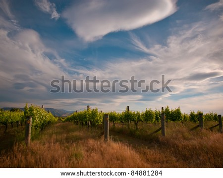 new zealand vineyard under dramatic sky with long exposure blur - stock photo