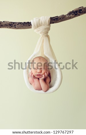 Newborn hanging by a branch - stock photo