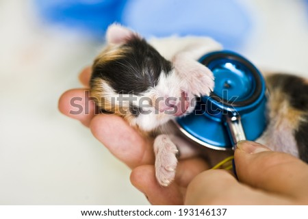 Newborn kitten in veterinarian hands - stock photo