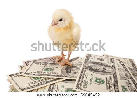 newborn small chicken and dollars on white background - stock photo