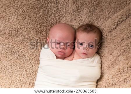 Newborn twins - stock photo