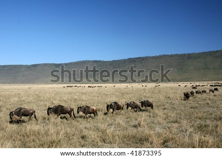 Ngorongoro Crater, Nature Reserve in Tanzania, East Africa - stock photo