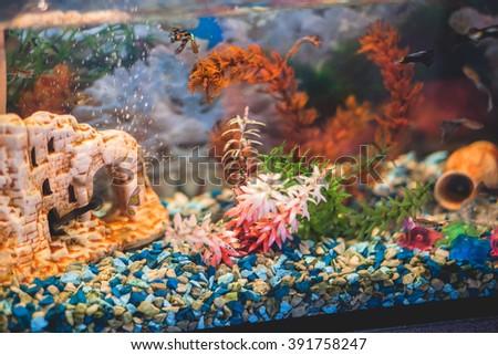 nice aquarium - stock photo