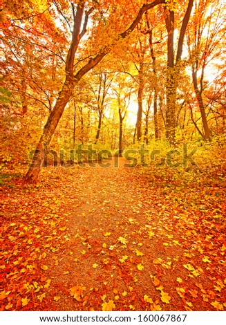Nice autumnal scene with vivid colors - stock photo