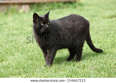 Nice black cat standing in the garden - stock photo