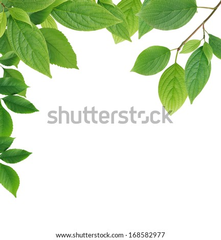 Nice border made from green leaves on white background - stock photo