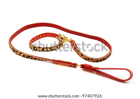 nice leash and collar on a white background - stock photo