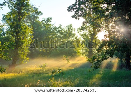 Nice morning landscape in forest - stock photo