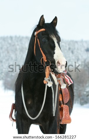 Nice paint horse with western equipment in winter - stock photo