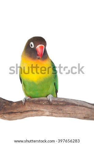Nice parrot with red beak and yellow and green plumage on white background - stock photo