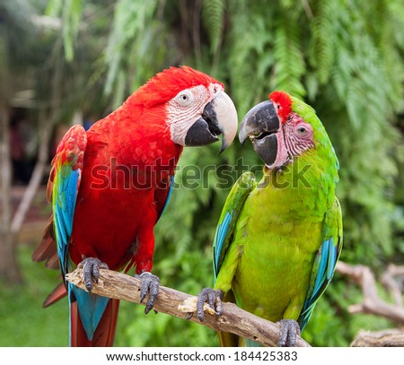 Nice parrots - Scarlet Macaw - stock photo
