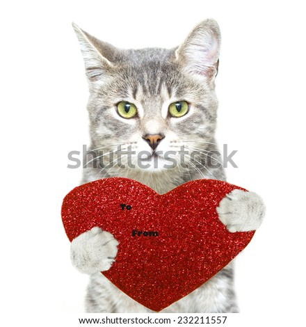 nice photo of a grey tabby cat with a red heart card - stock photo