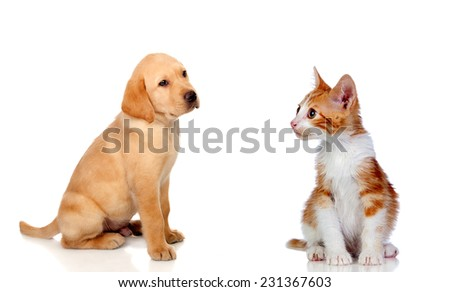 Nice puppy and kitten together isolated on white background - stock photo