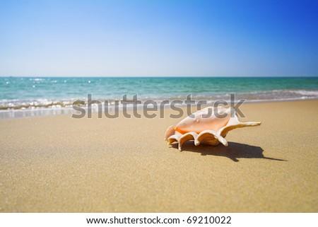nice sea shell on the sandy beach - stock photo