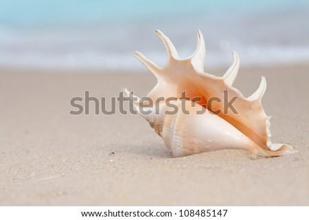 nice seashell on the beach sand - stock photo