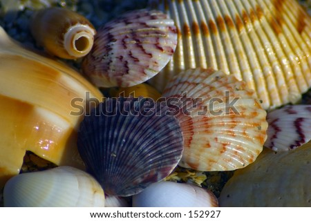 Nice shells (exclusive at shutterstock) - stock photo
