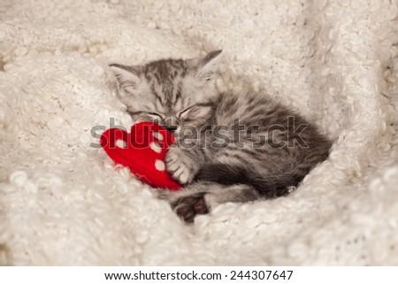 nice sleeping kitten and heart  - stock photo