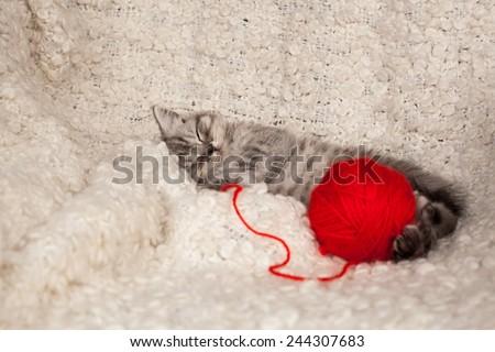 nice sleeping kitten with a ball of threads  - stock photo