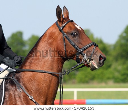 Nice sports horse against the sky and trees - stock photo