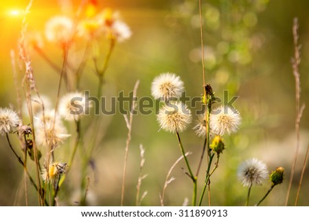nice summer flower meadow in sunny day - stock photo
