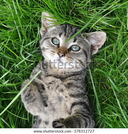 Nice tabby cat lying on green grass - stock photo