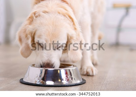 Nice taste.  Close up of beautiful dog eating from the bowl - stock photo