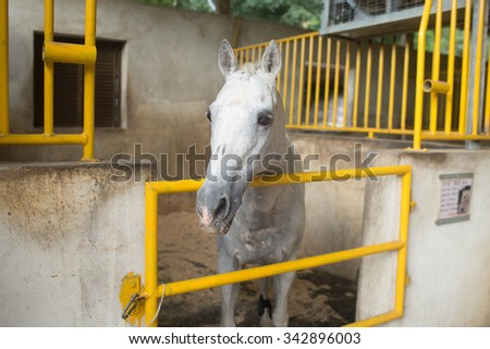 Nice thoroughbred foals in the stable. Purebred horses in the barn door - stock photo
