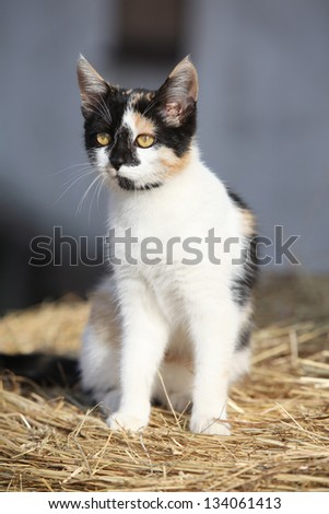 Nice three-coloured cat sitting on a straw in front of some building - stock photo