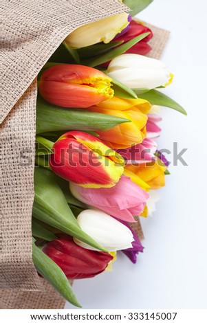 nice tulips - stock photo