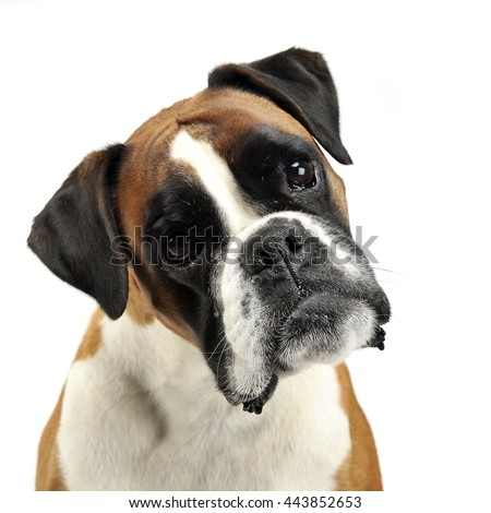 nice young mixed breed dog in the photo studio - stock photo