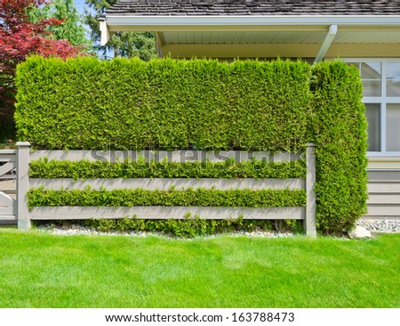 Nicely trimmed green fence with country style wooden one in the suburbs of Vancouver, Canada. Keeps privacy and security. Landscape trimming design. - stock photo