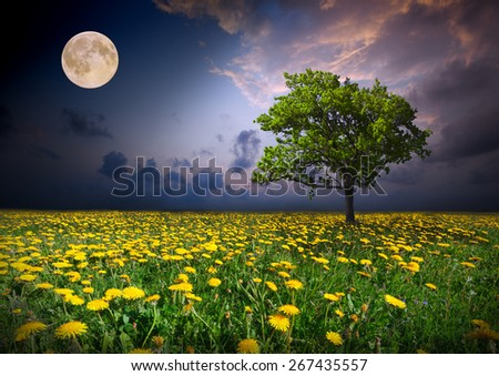 Night and the moon on a yellow flowers field - stock photo
