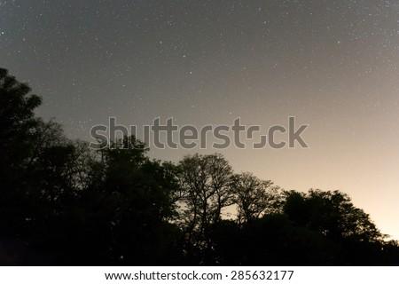 night forest scene - stock photo