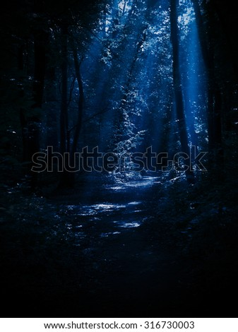 Night forest with moonlight rays - stock photo